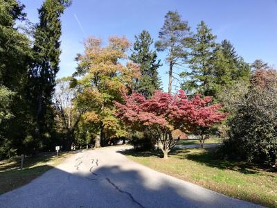 Arboretum Park road