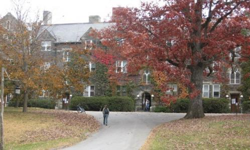 Bard College campus trees, trees
