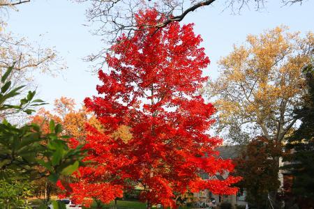 City of Bexley Fall tree
