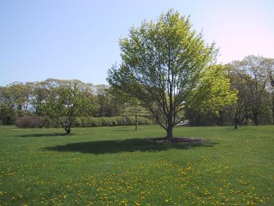 Longfellow Arboretum