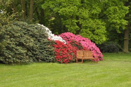 Pruhonice Botanic Garden -Rhododendrons