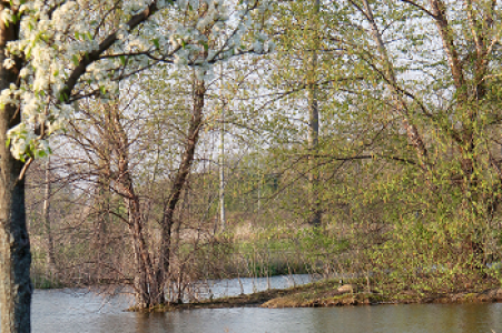 John Bartram Arboretum Island Pond