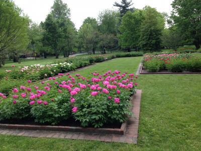 Ashland- The Henry Clay Estate - spring