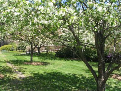 Acton Arboretum trees