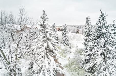 Arboretum at Regis University - snowy trees