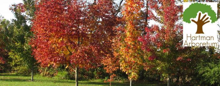 Hartman Arboretum