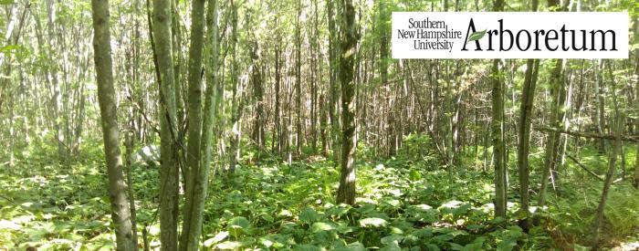 Southern New Hampshire Arboretum