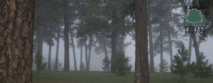 Kansas Forest Arboretum