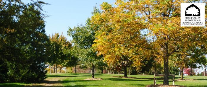 Cedar Valley Arboretum forest