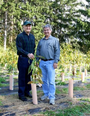 Dr. Charles Maynard, left, and Dr. William Powell of the SUNY College of Environmental Science and Forestry