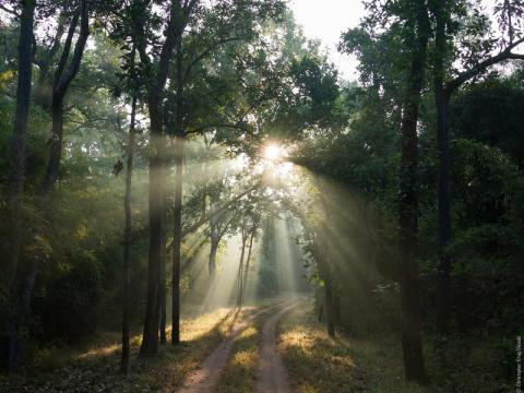 A forest in India (Christopher Kray /Flickr)
