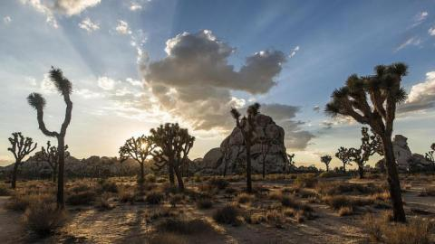 In Joshua Tree National Park | Photo: Christopher Michel, some rights reserved