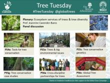 Tree Tuesday